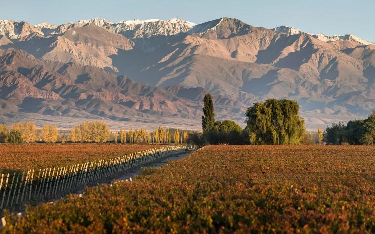 Los mejores vinos de Mendoza tendrán su noche en Buenos Aires