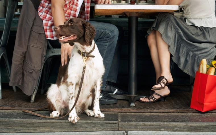 En el Día del Perro, 5 lugares para salir a comer con tu mascota