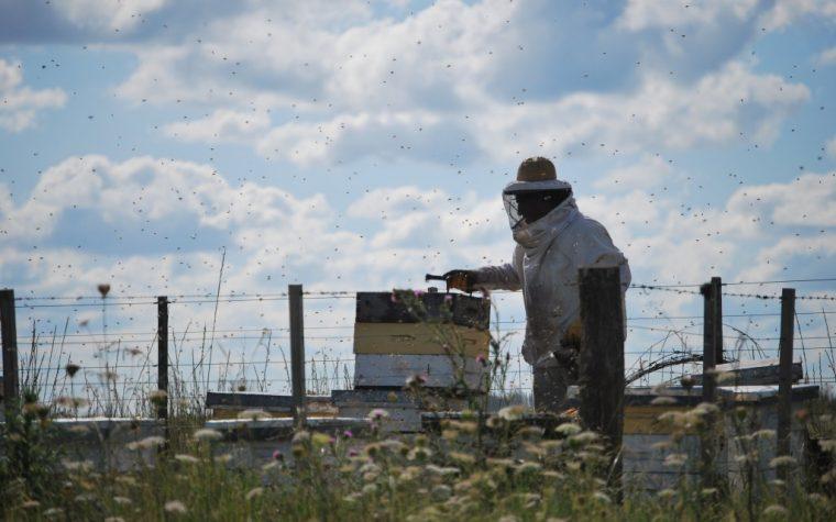 Alemania rechaza containers de miel uruguaya con rastros de glifosato