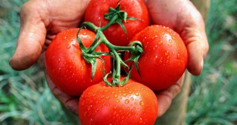 ¿Por qué es mejor no guardar los tomates en la heladera?