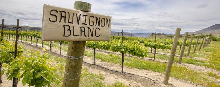 Estos son los 50 mejores Sauvignon Blanc del mundo