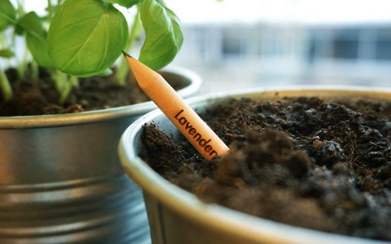 Conocé Sprout, el primer lapiz cultivable del mundo