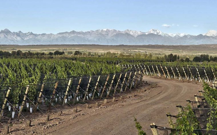 Bodega Casarena presenta su primer blanco: un Chardonnay Single Vineyard