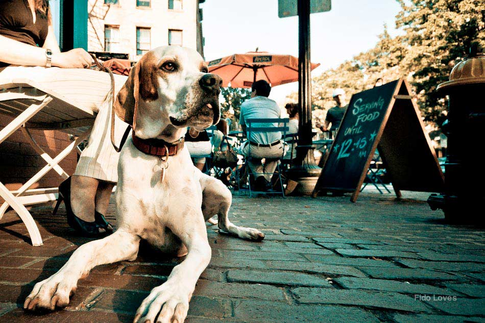 Restaurantes pet-friendly en Buenos Aires