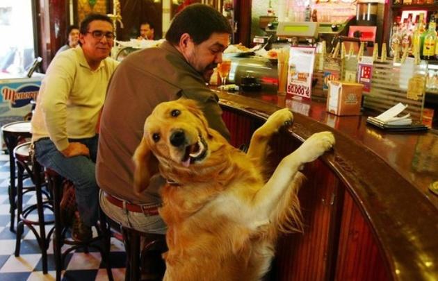 """Los porteños dijeron """"no"""" a las mascotas en los bares"""