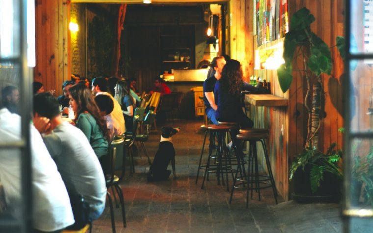 Los porteños podrán votar para que bares y restaurantes permitan mascotas