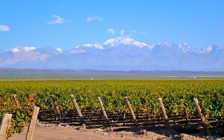 Expertos del vino anticipan que la cosecha 2017 será excelente