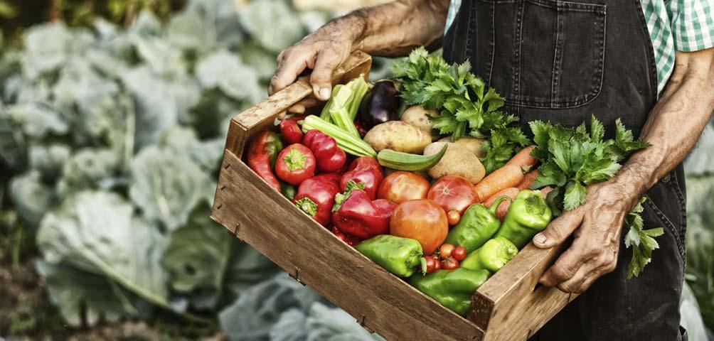 """""""Un menú para el cambio"""", nueva iniciativa internacional del Movimiento Slow Food"""