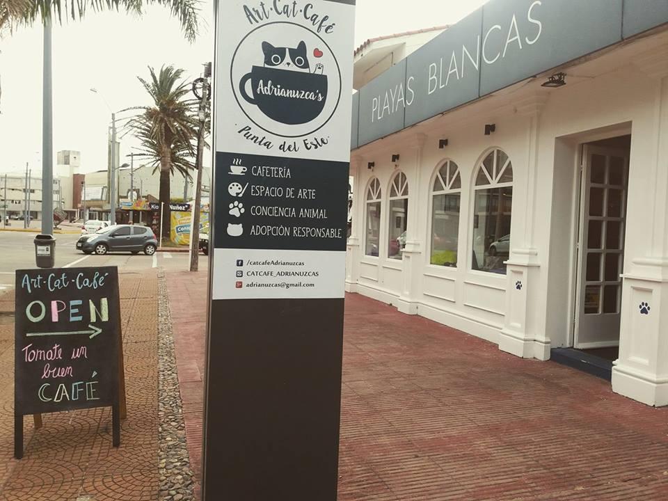 """Abrió en Punta del Este el primer """"Café de Gatos"""" de la región"""