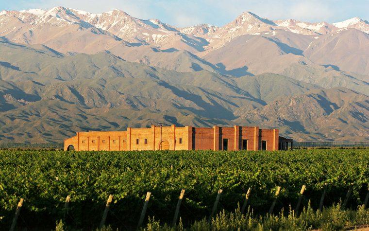 Verano en el viñedo: una exquisita experiencia