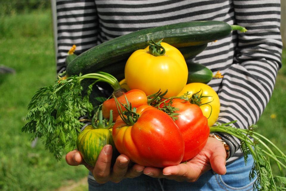 Se celebra el Día Internacional de la Gastronomía Sustentable