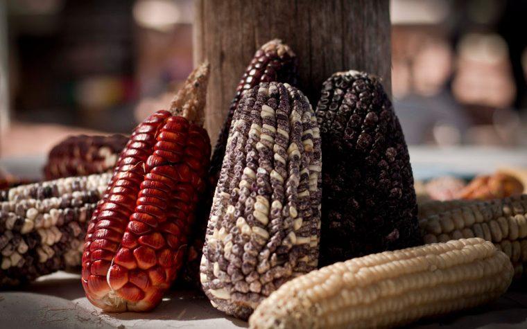 Comenzó la Semana de los Cultivos Andinos en Buenos Aires
