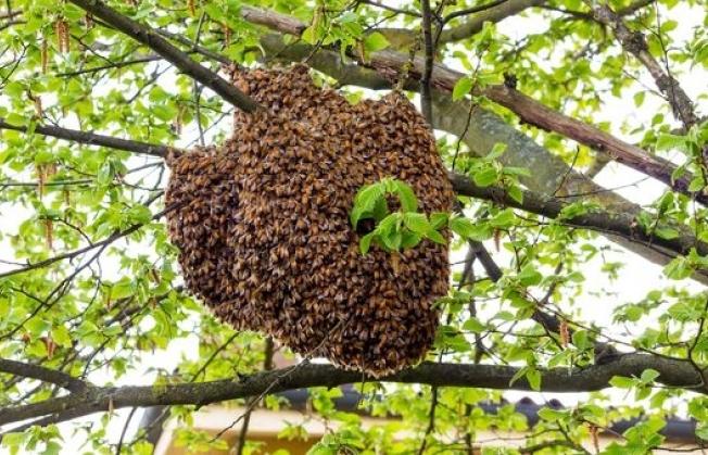 La Miel Silvestre del Pueblo Wichí, el nuevo Baluarte Slow Food