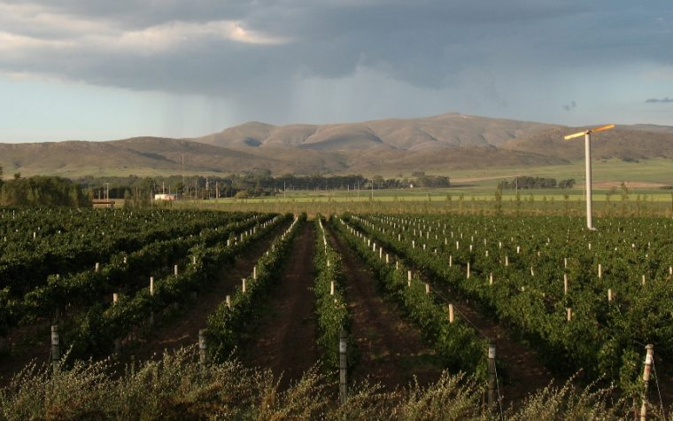 Los mejores Vinos de la Provincia de Buenos Aires se dan cita en Olivos