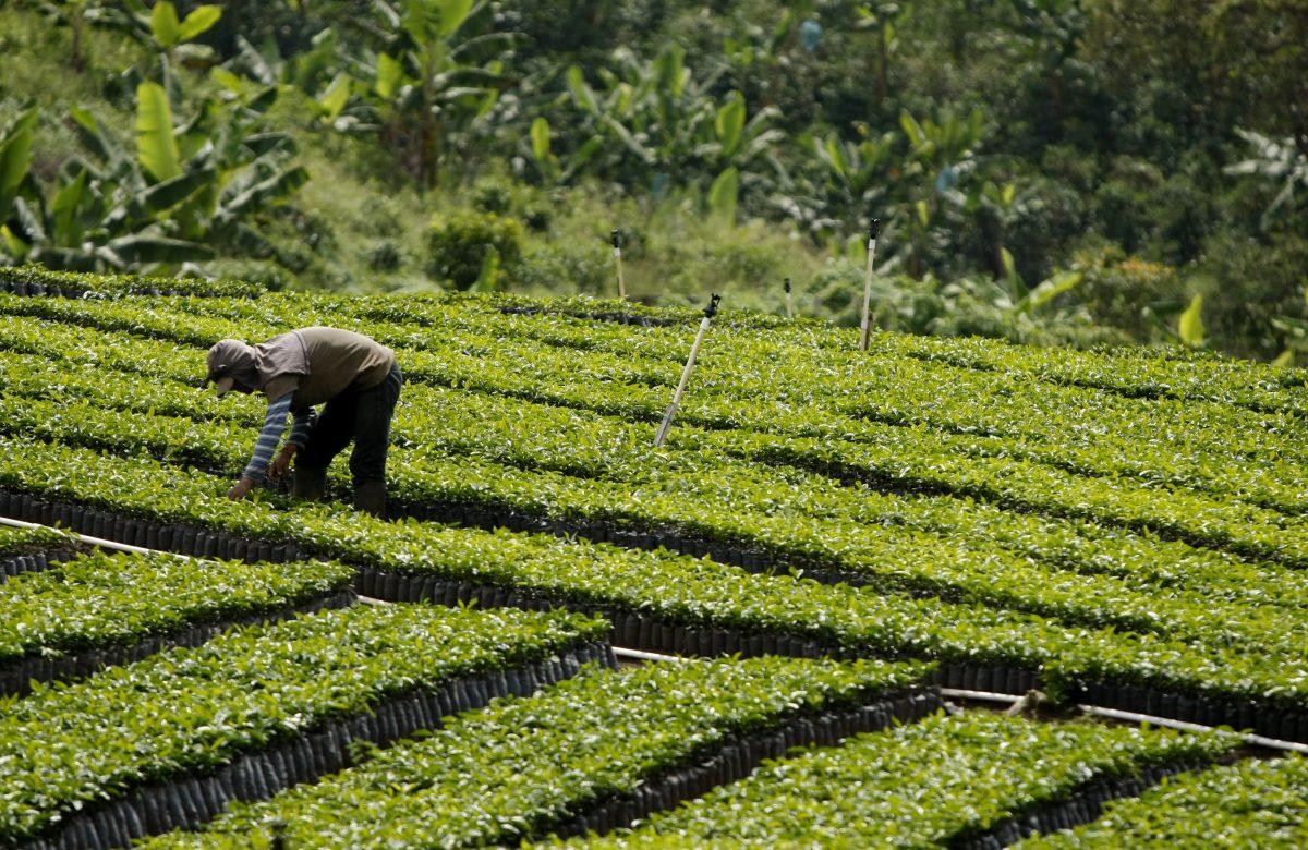 Para todos los amantes del café, nada como la ruta cafetera de América Latina